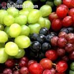 Zin Fruits - Trần Duy Hưng